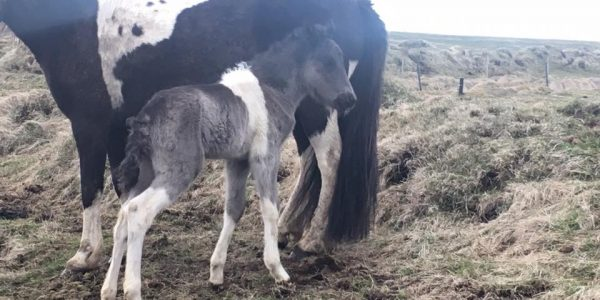 This year's first foal